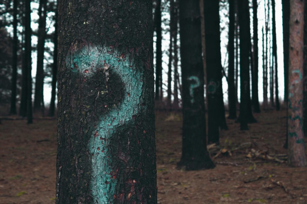 question marks painted on tree trunks in a forest